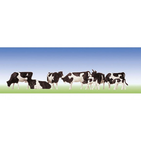 Cows, black-spotted